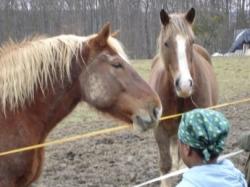 Pferde_045