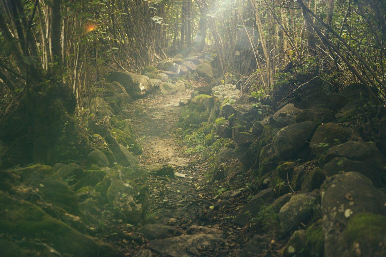 Achtsamkeit im Wald – sich selbst und der Natur auf der Spur