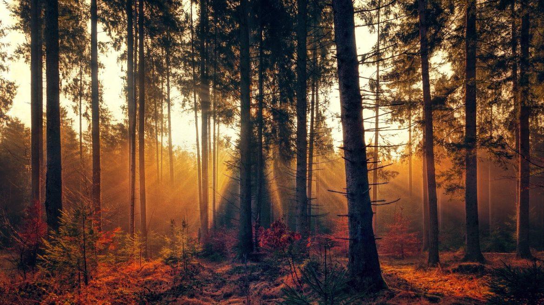 FÄLLT AUS! Workshop: Jeder Tag hat sein Licht und seine Schatten
