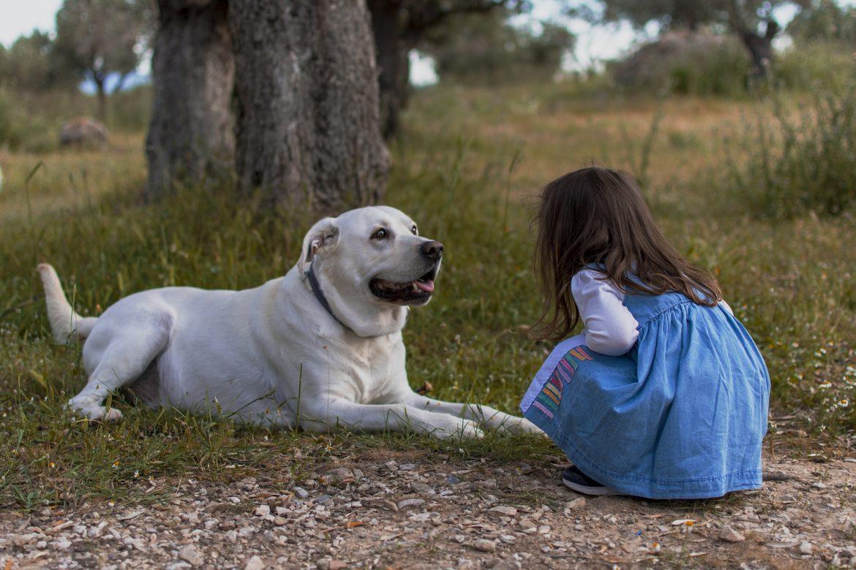 FÄLLT AUS! Ein Hund zieht in die Familie ein